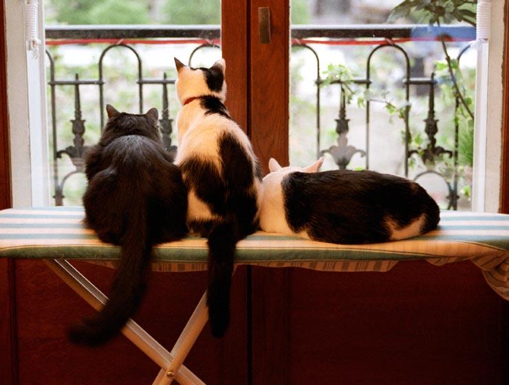 Cat - Innocent days